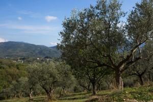 Il Colle Della Croce - Uliveto