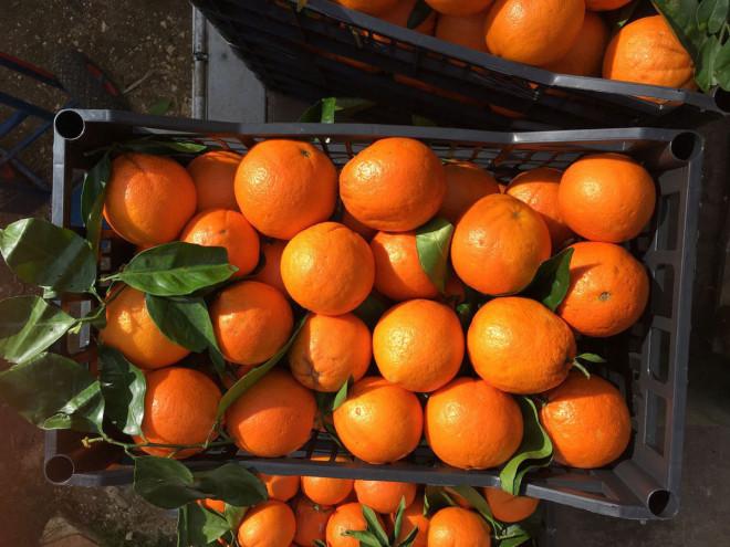 arance-3